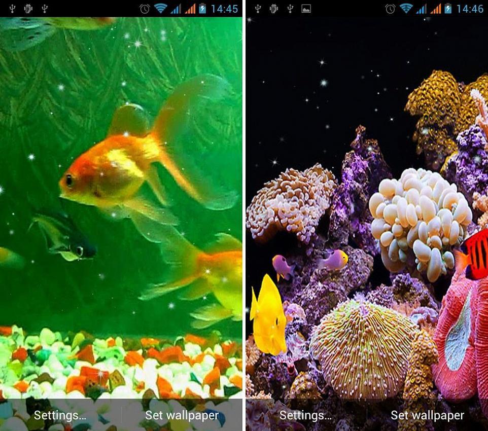 Живые обои на андроид рыбки скачать бесплатно 5