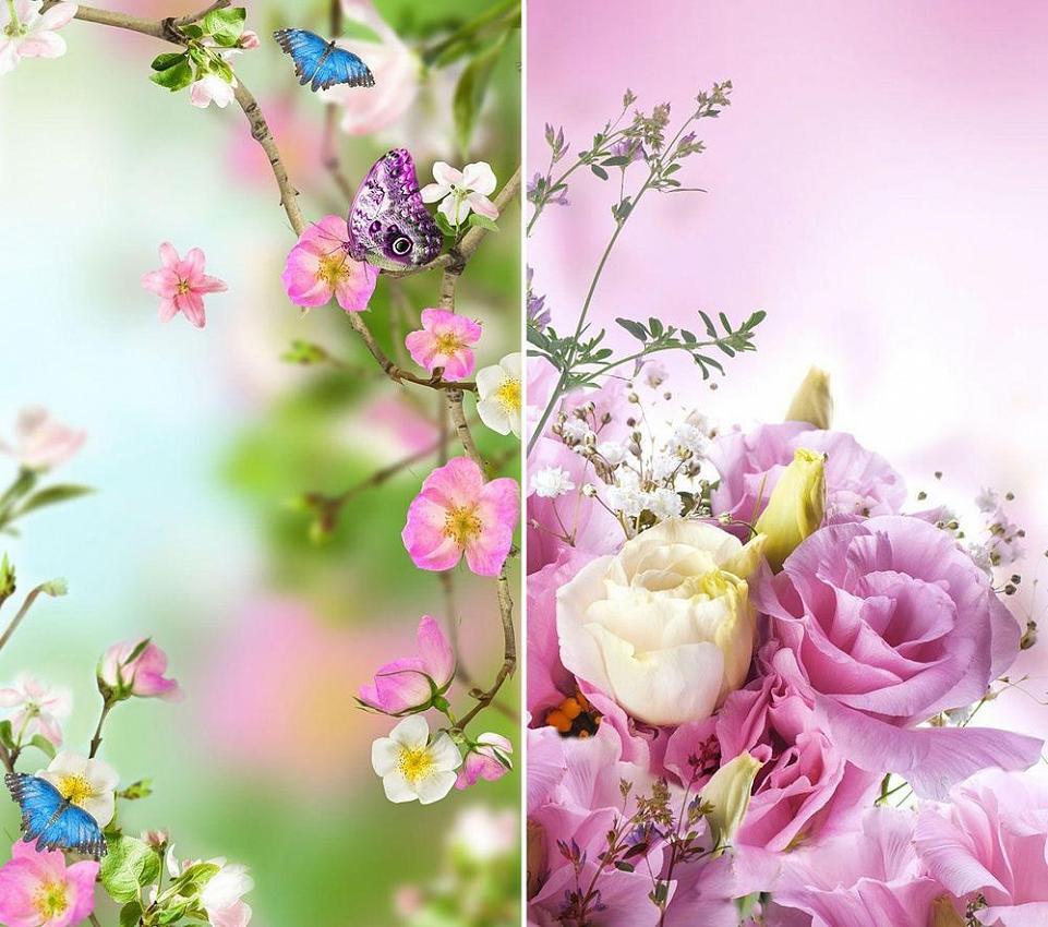 570681885ea Цветы Живые Обои на андроид скачать бесплатно apk