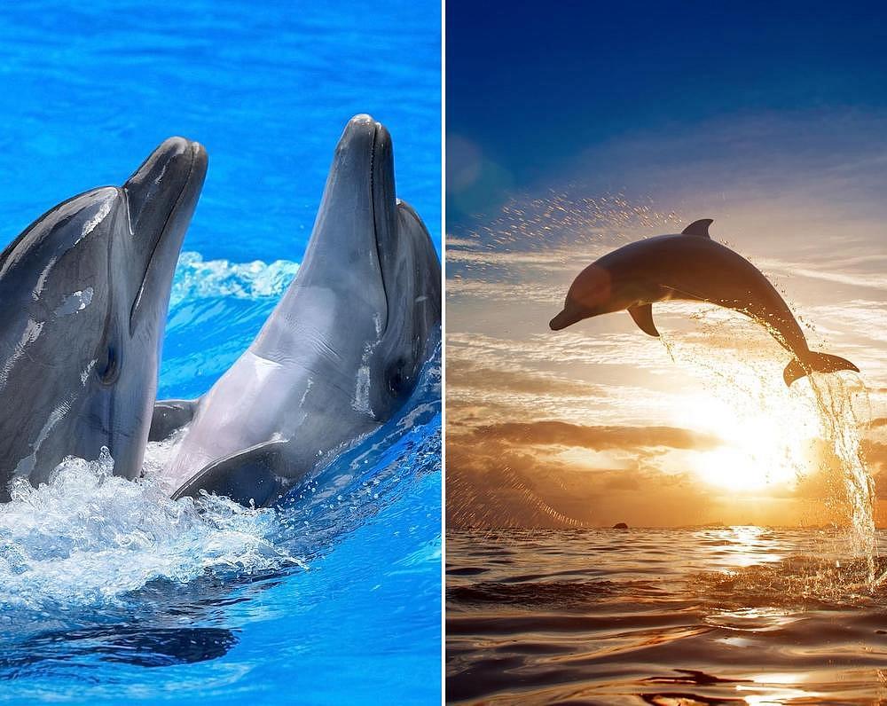 Скачать бесплатно на андроид живые обои дельфины
