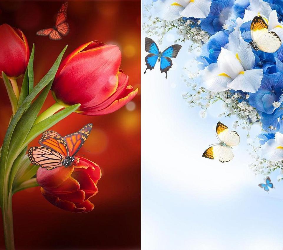 живые цветы скачать картинки